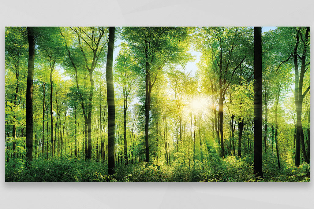 sun-drenched forest