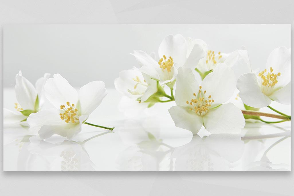 jasmine flowers 2